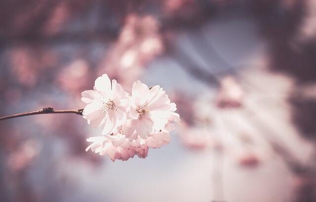 En attendant le printemps…